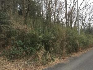 下草刈りの前。篠が生い茂っています。